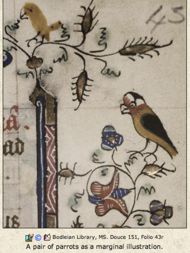 parrot meets parrot