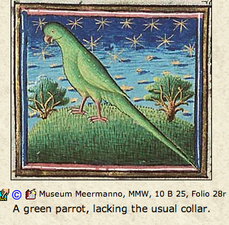 future/istic parrot looks speculatively to the stars