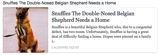 a dog with two noses called Snuffles