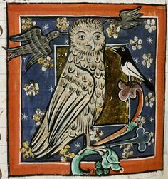 magpie-and-owl