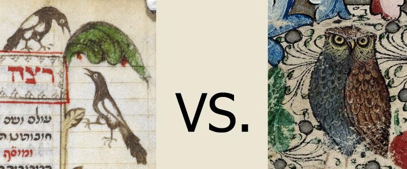 magpie-vs-owl